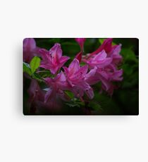 Rhododendron #3 Canvas Print