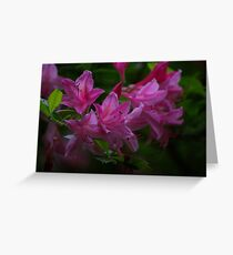 Rhododendron #3 Greeting Card