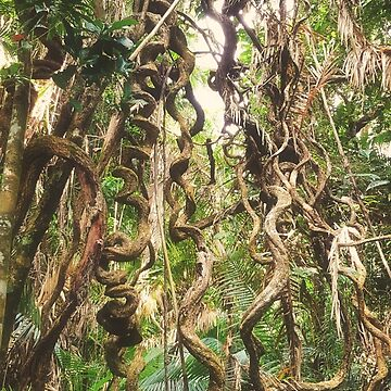 A Little Bit Twisted - Tropical Lianas of Far North Queensland by Bellamaree