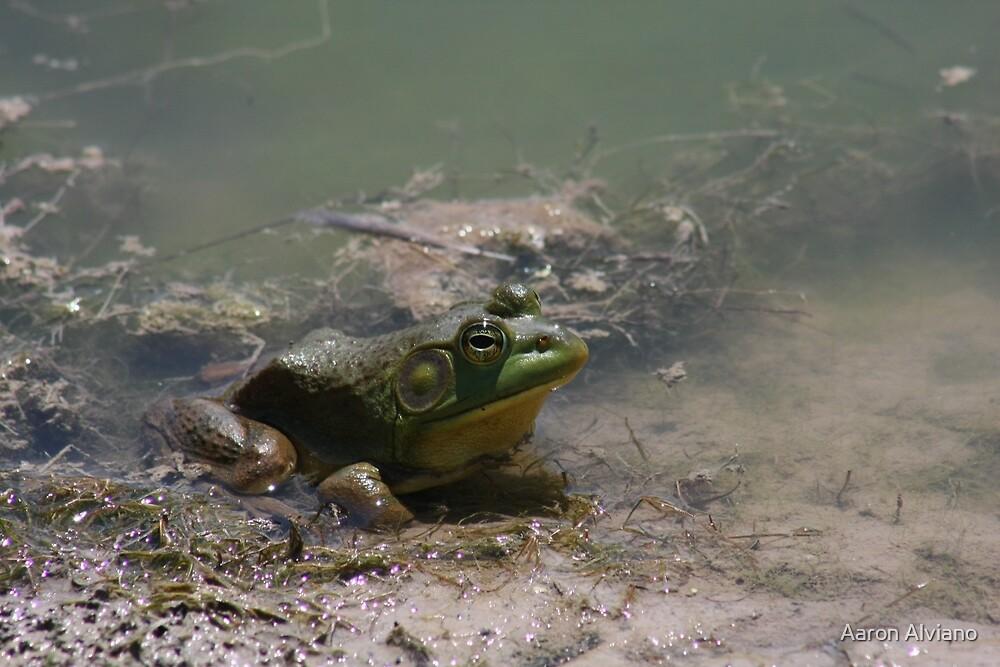 Frog by Aaron Alviano