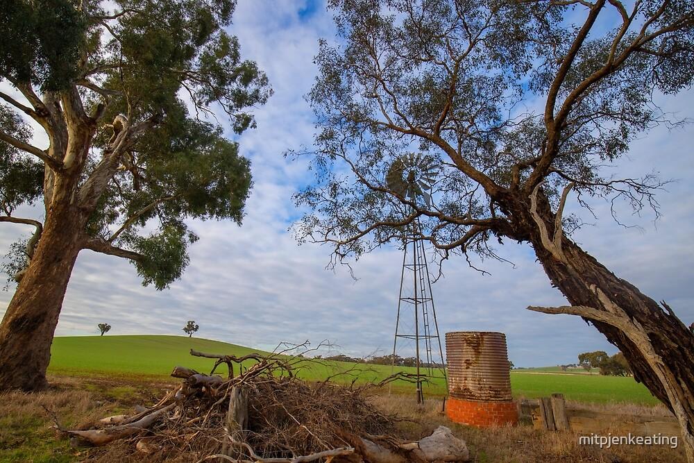 Peek a boo..windmill.... by mitpjenkeating