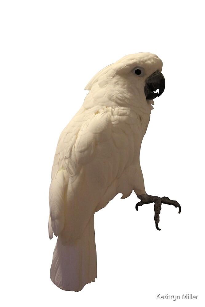 Umbrella Cockatoo by Kathryn Miller