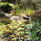Magical lily pond by Lynne Kells (earthangel)