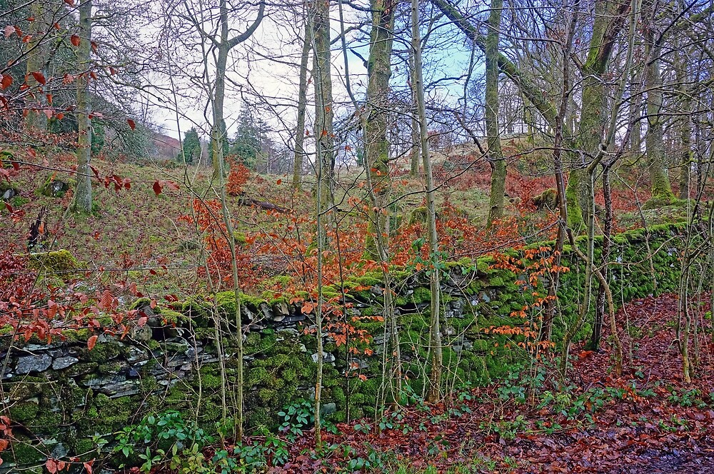 Old Stone Wall by Harry Oldmeadow