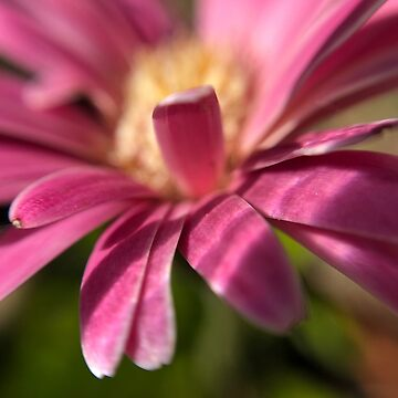 Pink flower by Zane