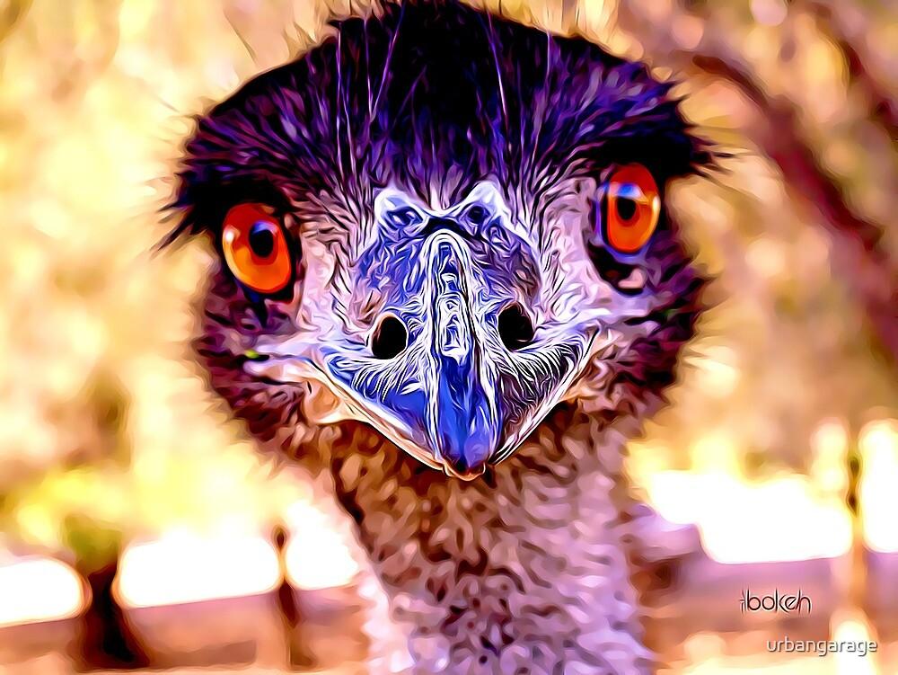 What!? Crazy Looking Old Man Emu by urbangarage