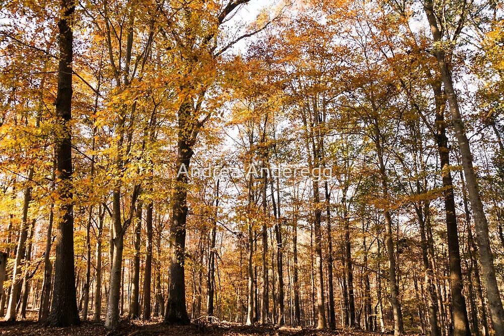 North Georgia Fall Colors by andreaanderegg