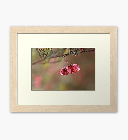 Small Pod/Flower Framed Print