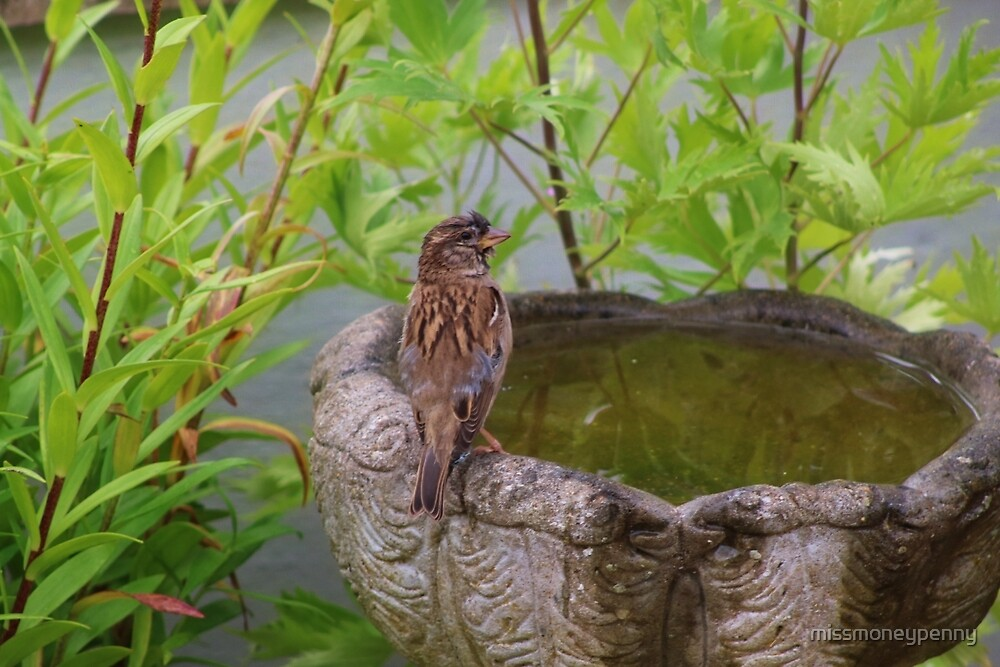 Young sparrow by missmoneypenny