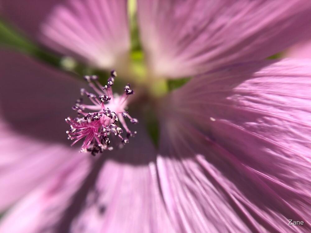 Pink flower  by Zane