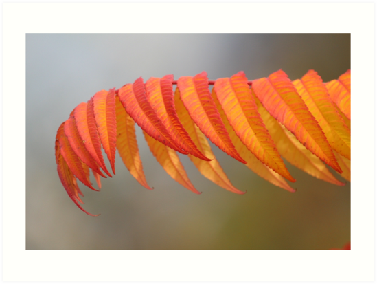 Autumn leaves by Sven Bonorden