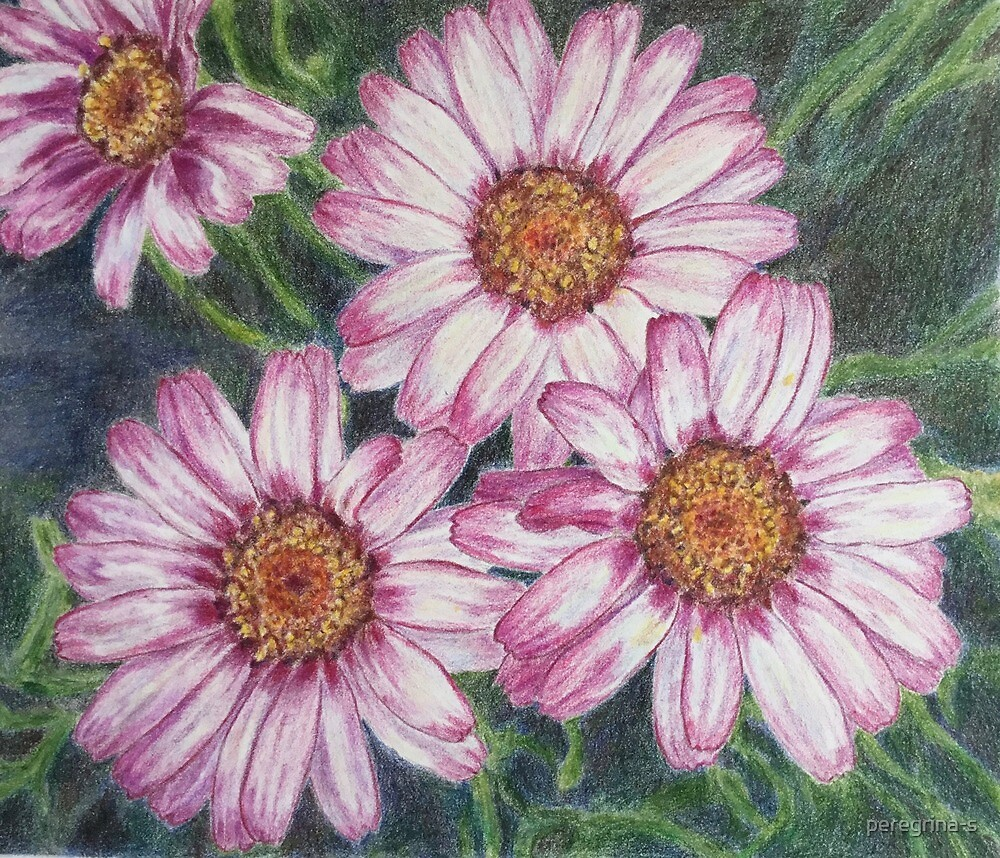 pink daisies by peregrina-s