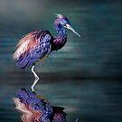 Tricoloured Heron Fishing by Brian Tarr