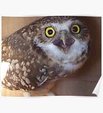 borrowing owl 2 Poster