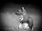 One squirrel by missmoneypenny