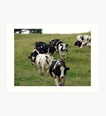 Dairy Cattle Art Print