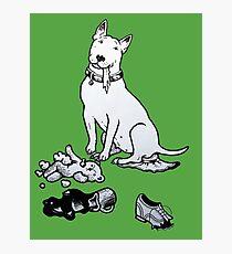 The Helpful Bull Terrier Photographic Print