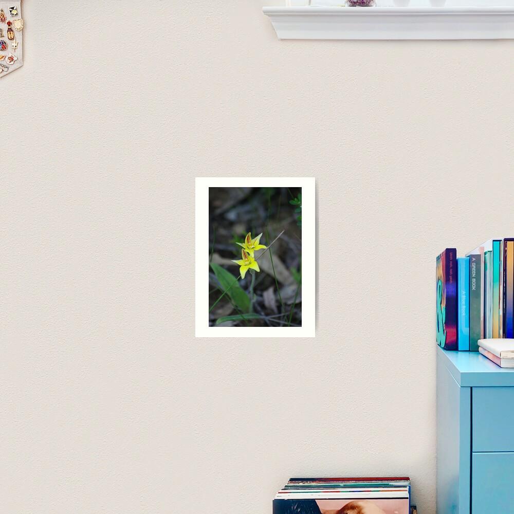 Cowslip Orchid Art Print