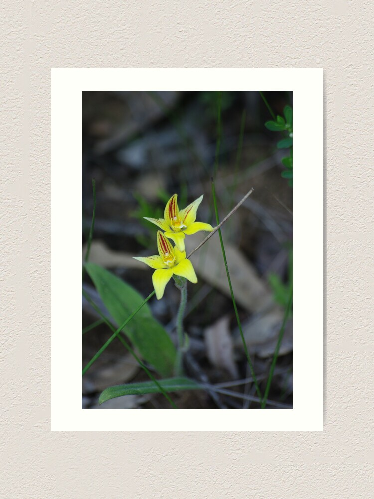 Alternate view of Cowslip Orchid Art Print