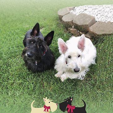 Bella & Bianca – I love my Scotties by BonniePortraits