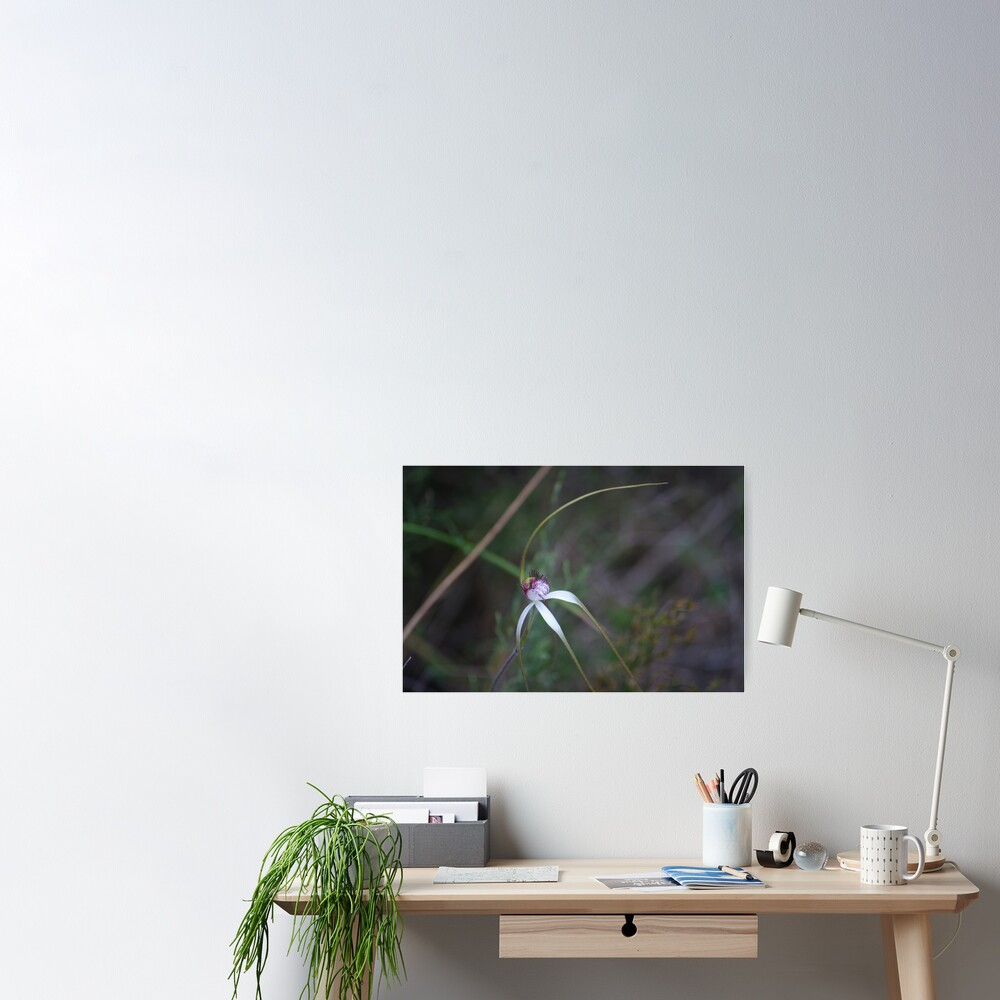 Spider Orchid 2 Poster