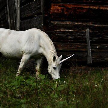 Do you believe in Unicorns? by darby8