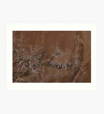 Canyon Tree - Escalante Grand Staircase National Monument Art Print