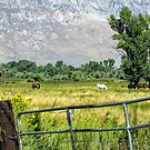 Peaceful Pasture by marilyn diaz