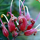 Grevillea friendship. by Lozzar Flowers & Art