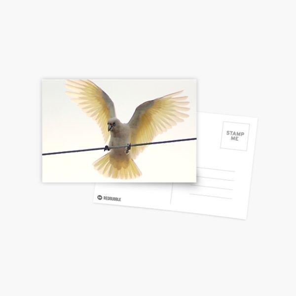 Muir's Corella Postcard