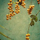 Berries by catrionam