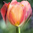 three tulips in one by jarekwitkowski