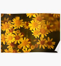 Yellow flowers shower Poster