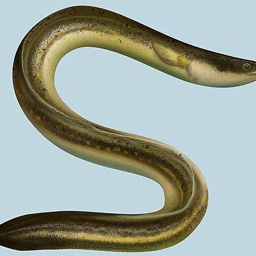 European eel (Anguilla anguilla) by GaffaMondo