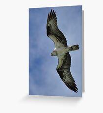 Osprey in Flight Greeting Card
