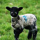 Spring Lamb by Look-Its-Darren