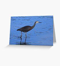 White Faced Heron,Ralphs Bay,Tasmania Greeting Card