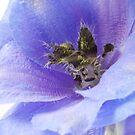 Delphinium blue by Sandra O'Connor