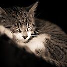 The Kitten by Daphne Johnson
