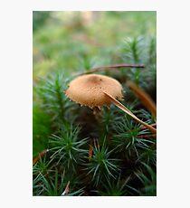 Mushroom and pine needle Photographic Print
