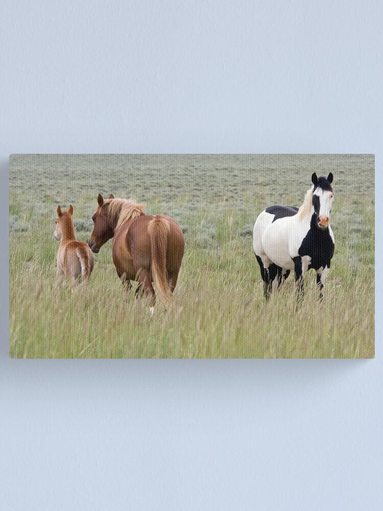 Alternate view of Wild Pinto Stallion, Red Desert Canvas Print