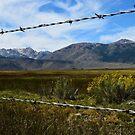 Pasture in Bridgeport, California by Mike Kunes
