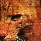 Kitty.. by Kasia Fiszer