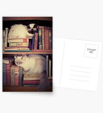 Library Cats Postcards