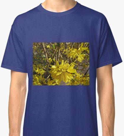 Goldene Forsythie-Blume Classic T-Shirt