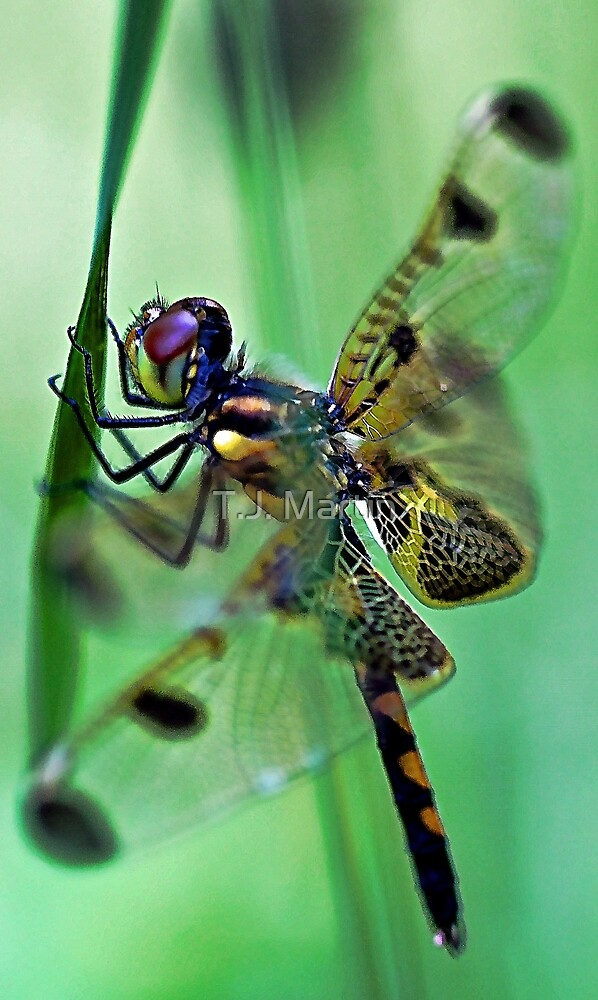 Dragonfly - At Rest by T.J. Martin