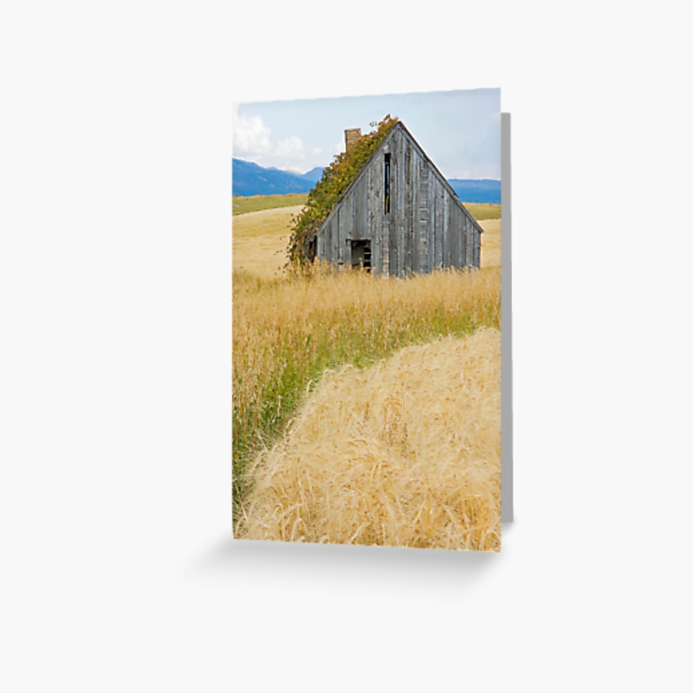 Broke Down Beauty, a.k.a. the Butt of the Barn Greeting Card