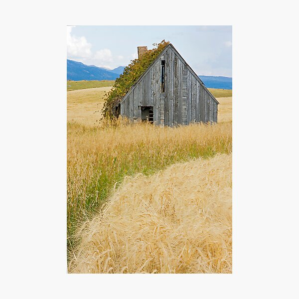 Broke Down Beauty, a.k.a. the Butt of the Barn Photographic Print