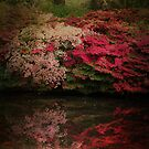 Enchanted Garden  by Jasna