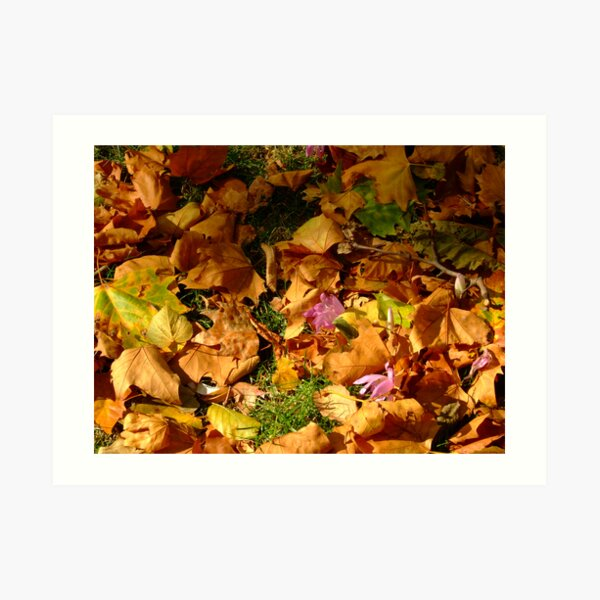 Autumn surprise Art Print